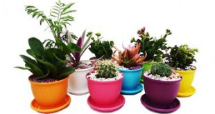 تولیدی گلدان پلاستیکی گلخانه