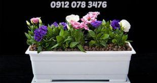 قیمت گلدان پلاستیکی گلخانه ای